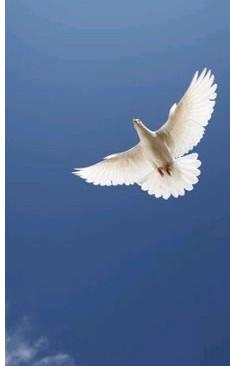 pentecost-dove.jpg