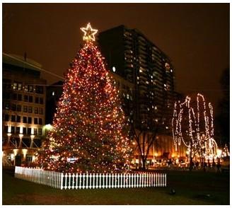 dn-bostonchristmastreefromhalifax.jpg