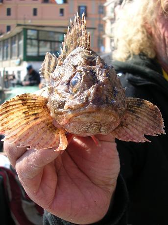 Fresh catch in the Anzio harbour