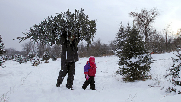 Father, daughter take away Christmas tree from farm in Minnesota