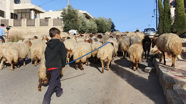 Shepherds1