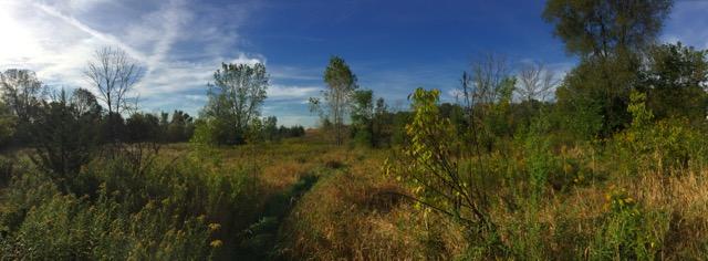 Wetland (1)