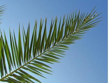 kd-palmsunday.jpg