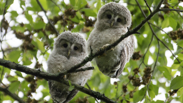 Baby owls leave nest in Japan; papal encyclical on environment expected later this year