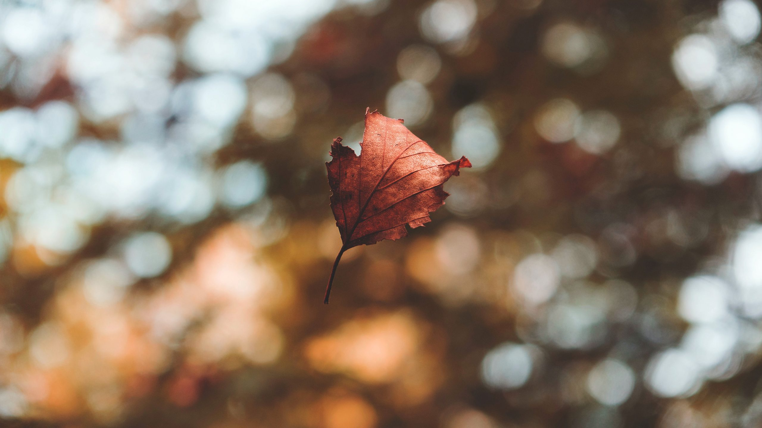 What fall teaches us about letting go